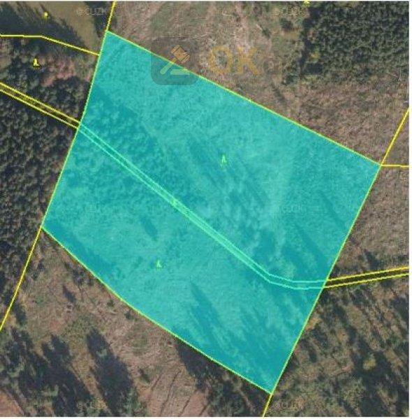 Dražba lesního pozemku v k.ú Krásná pod Lysou Horou