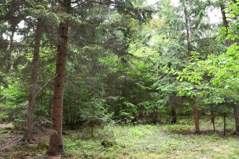 Dražba lesního pozemku k.ú. Vlachovice