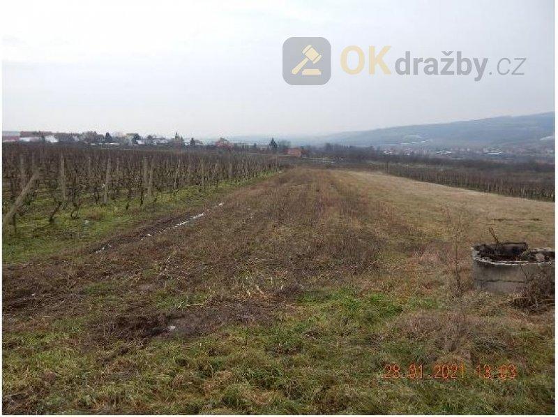 Dražba vinice obec Kobylí okres Břeclav